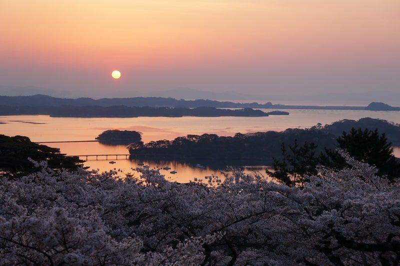 西行戻しの松公園|朝焼けと桜と松島湾
